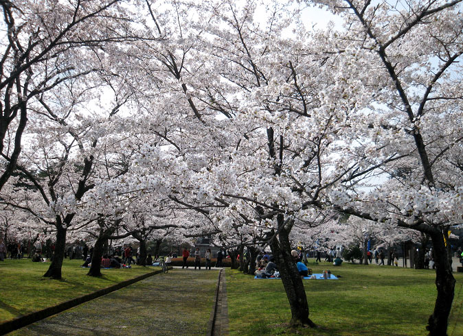 白石城・益岡公園の桜 見頃は!?開花・アクセス …